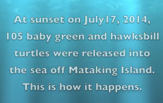 Turtles Released into the sea off Mataking Island